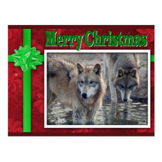 c-2011-grey-wolf-053 postcard