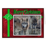 c-2011-grey-wolf-053 tarjeta de felicitación