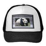c-2011-panda-0015 hats