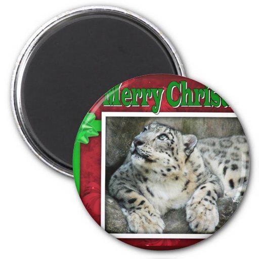 c-2011-snow-leopard-036 imanes de nevera
