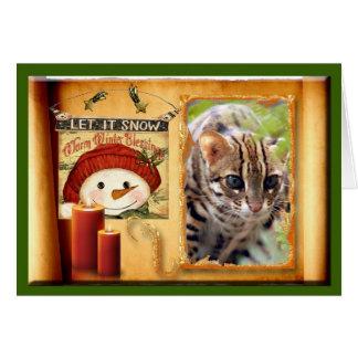 c-bengal-cat-336 card