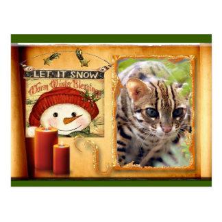 c-bengal-cat-336 postcard