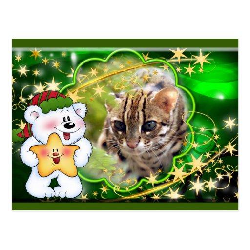 c-bengal-cat-338 postales
