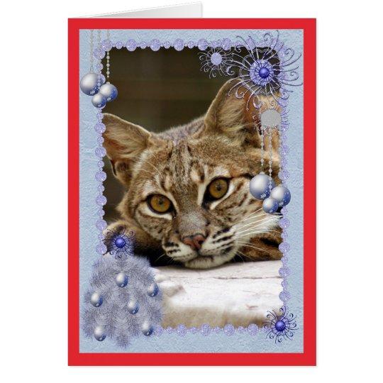c-bobcat-17-b card