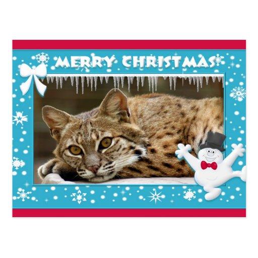 c-bobcat-259-b postales