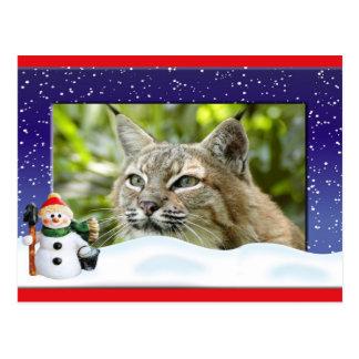 c-bobcat-261-c postcard