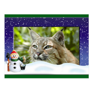 c-bobcat-261 postcard