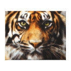 C.E. Siberian Tiger Canvas Print