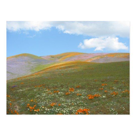 C Spring Lndscp Postcard