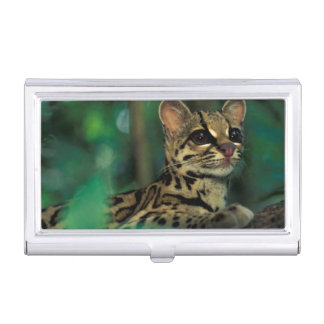 CA, Central Panama, Soberania NP, Margay Case For Business Cards