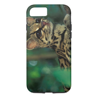 CA, Central Panama, Soberania NP, Margay iPhone 8/7 Case