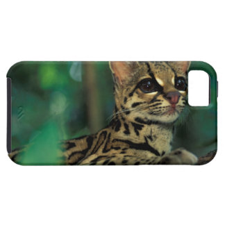 CA, Central Panama, Soberania NP, Margay iPhone SE/5/5s Case