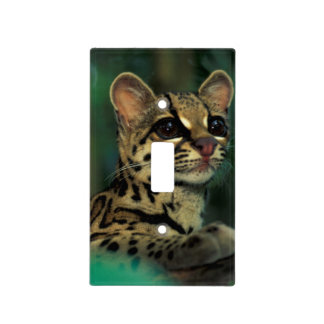 CA, Central Panama, Soberania NP, Margay Light Switch Cover