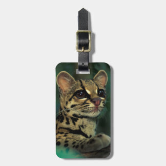 CA, Central Panama, Soberania NP, Margay Tags For Bags