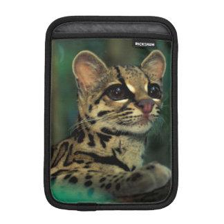 CA, Central Panama, Soberania NP, Margay Sleeve For iPad Mini