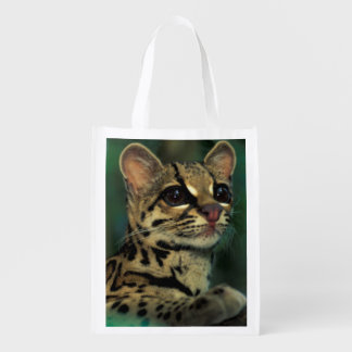 CA, Central Panama, Soberania NP, Margay Grocery Bags