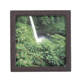 CA Costa Rica Cascada e impatients de La Paz Caja De Joyas De Calidad