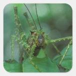 CA, Costa Rica, estación biológica de la selva del Pegatina Cuadradas Personalizada