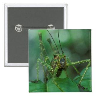CA, Costa Rica, La Selva Biological Station, 2 Inch Square Button