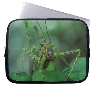 CA, Costa Rica, La Selva Biological Station, Computer Sleeves