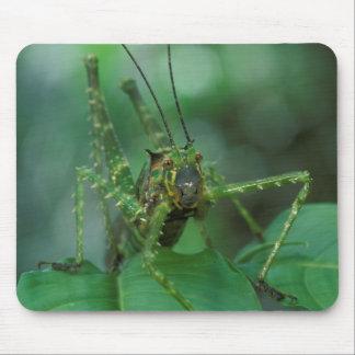 CA, Costa Rica, La Selva Biological Station, Mouse Pad