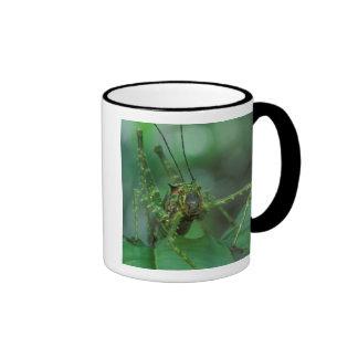 CA, Costa Rica, La Selva Biological Station, Ringer Coffee Mug