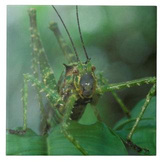 CA, Costa Rica, La Selva Biological Station, Tile