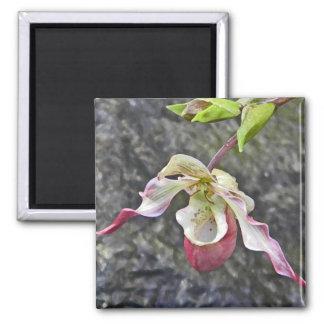 CA imán de la orquídea de señora deslizador