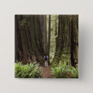 CA, Jedediah Smith Redwoods State Park, Button