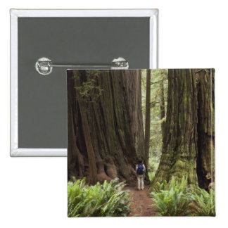 CA, Jedediah Smith Redwoods State Park, 2 Inch Square Button