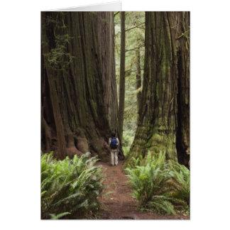 CA, Jedediah Smith Redwoods State Park, Card