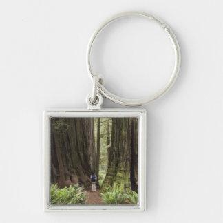 CA, Jedediah Smith Redwoods State Park, Keychain