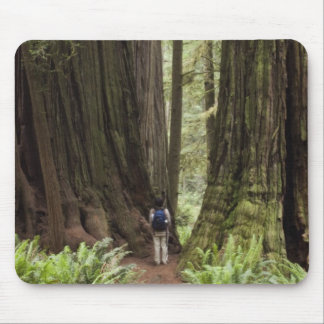 CA, Jedediah Smith Redwoods State Park, Mouse Pad