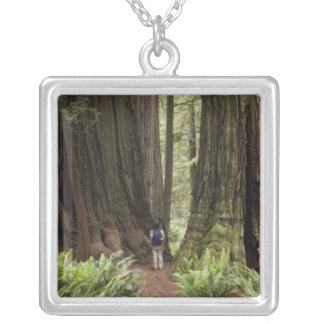 CA, Jedediah Smith Redwoods State Park, Necklace