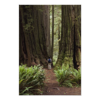 CA, Jedediah Smith Redwoods State Park, Poster