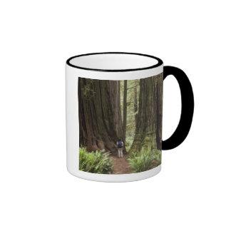 CA, Jedediah Smith Redwoods State Park, Ringer Mug