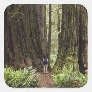 CA, Jedediah Smith Redwoods State Park, Square Sticker