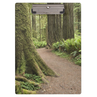 CA, Jedediah Smith State Park, Simpson-Reed Clipboards