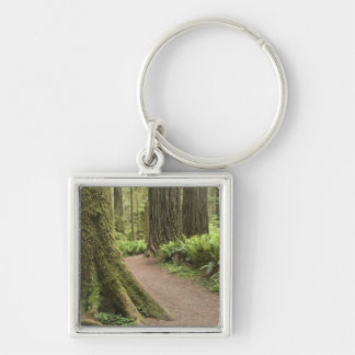 CA, Jedediah Smith State Park, Simpson-Reed Keychains