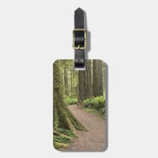 CA, Jedediah Smith State Park, Simpson-Reed Travel Bag Tag