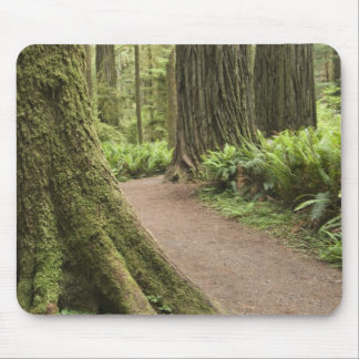 CA, Jedediah Smith State Park, Simpson-Reed Mouse Pad