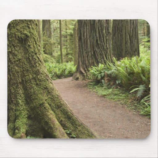 CA, Jedediah Smith State Park, Simpson-Reed Mouse Pads