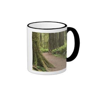 CA, Jedediah Smith State Park, Simpson-Reed Mug