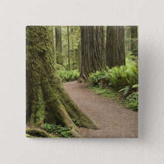 CA, Jedediah Smith State Park, Simpson-Reed Pinback Button