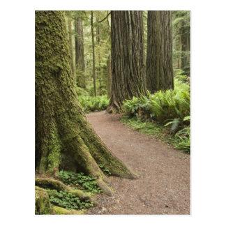 CA, Jedediah Smith State Park, Simpson-Reed Postcards