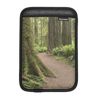 CA, Jedediah Smith State Park, Simpson-Reed Sleeve For iPad Mini