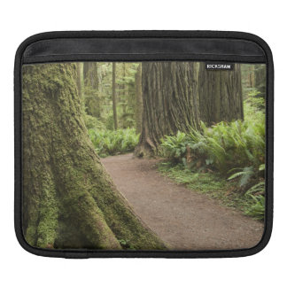 CA, Jedediah Smith State Park, Simpson-Reed Sleeve For iPads