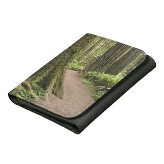 CA, Jedediah Smith State Park, Simpson-Reed Wallet