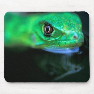 CA, Panama, Barro Colorado Island, baby Green Mouse Pad
