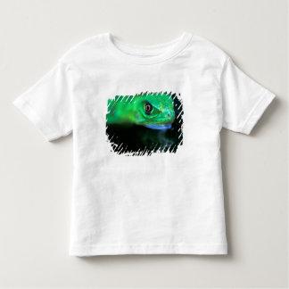 CA, Panama, Barro Colorado Island, baby Green Toddler T-shirt